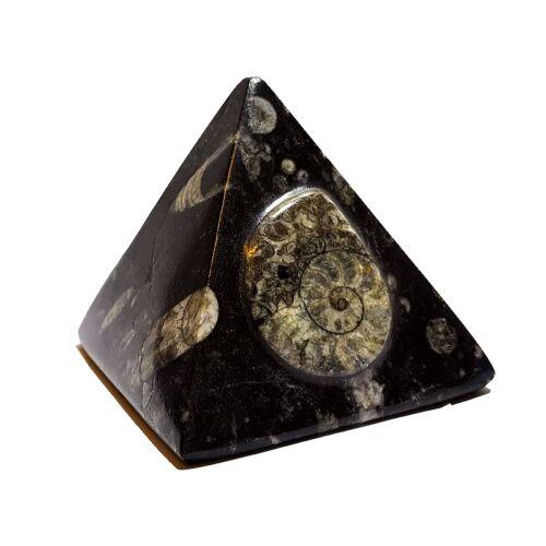 Ortocerász - ammonitesz piramis